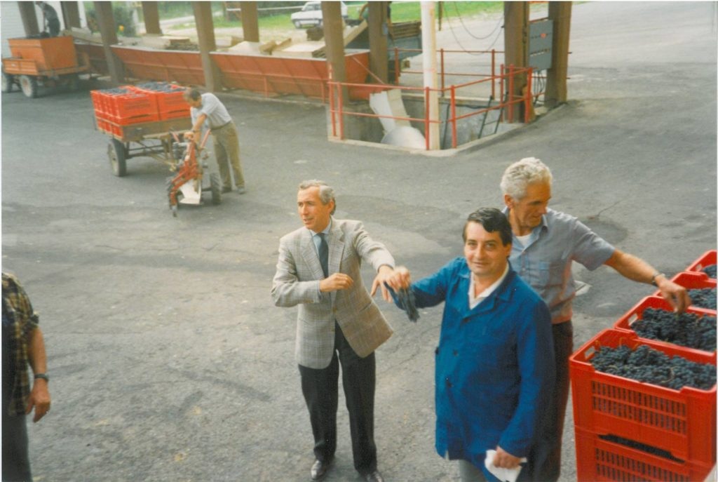 Anni 90 - Vendemmia: Il Direttore Cellino
